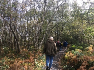 The Girley bog walk begins in a small woodland