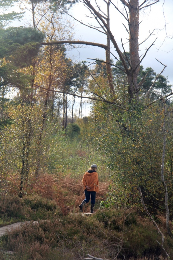 The Girley bog walk has areas that adjoin forested areas